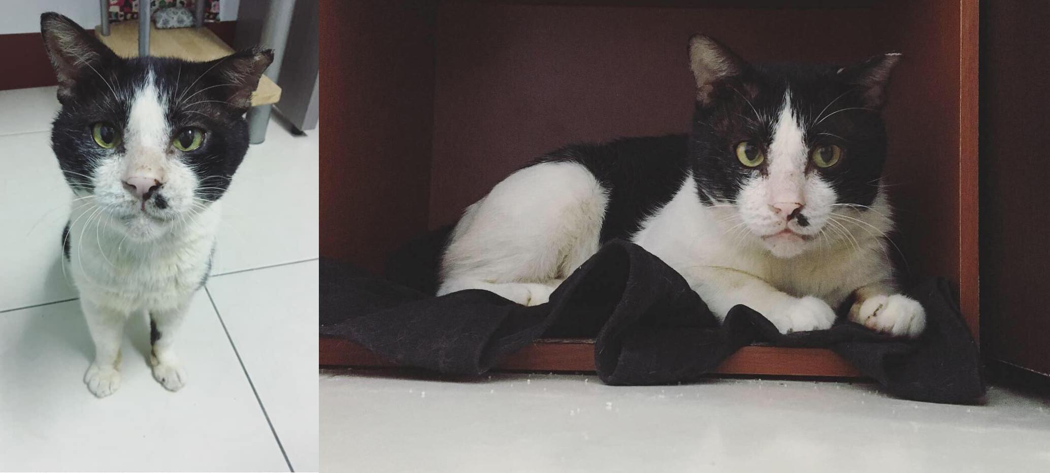 樓上有貓, 流浪動物, 領養不棄養, 流浪貓
